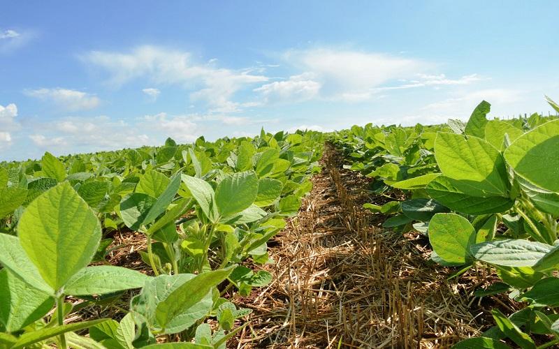 Manejo de doenças nas lavouras de soja
