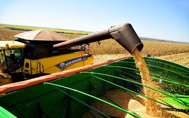 Clima seco no Brasil deve manter preços do milho elevado