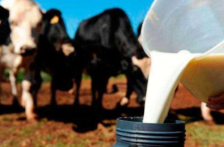 Preço pago ao produtor de leite tem aumento