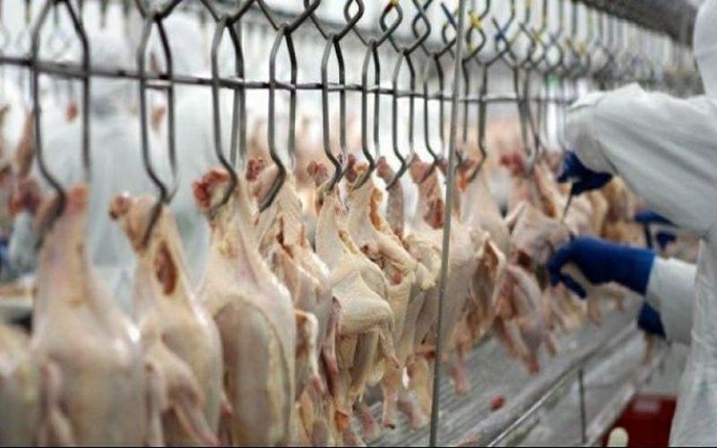 Exportações de carne de frango crescem