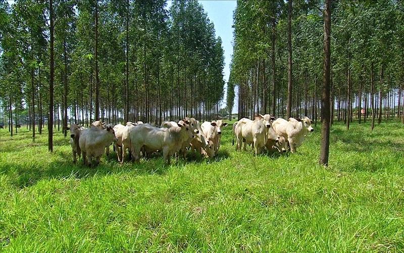 Carne Baixo Carbono permite aumentar lotação no pasto