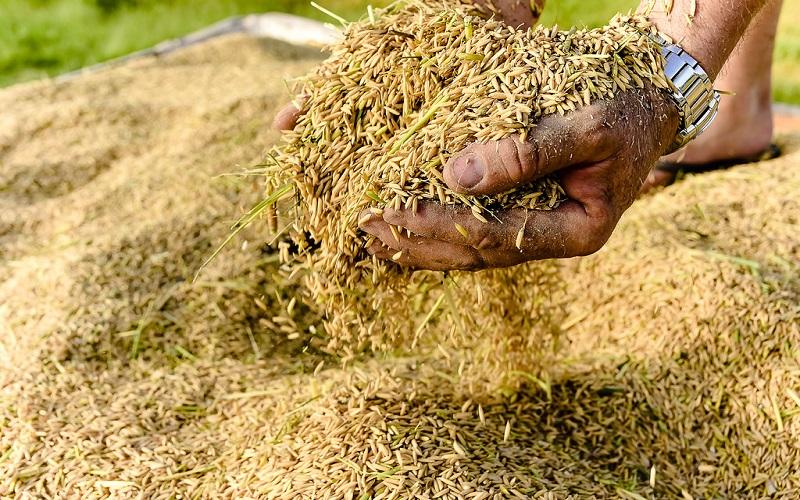 Preço do arroz permanece firme em Abril