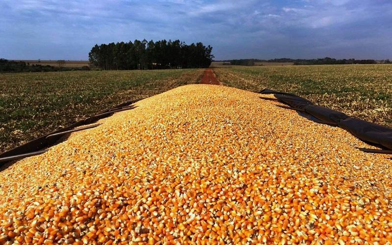 Produtores limitaram a oferta de milho no spot em abril