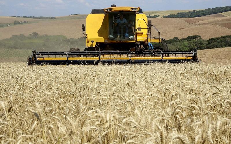 Estimativa para safra mundial de grãos 2021/2022
