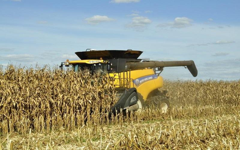 Produção de milho por hectare