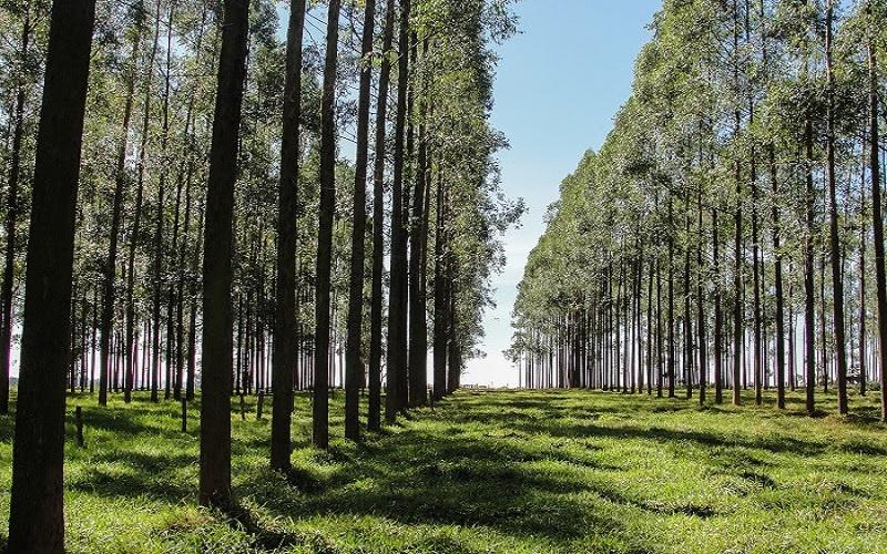 Árvores em sistemas integrados
