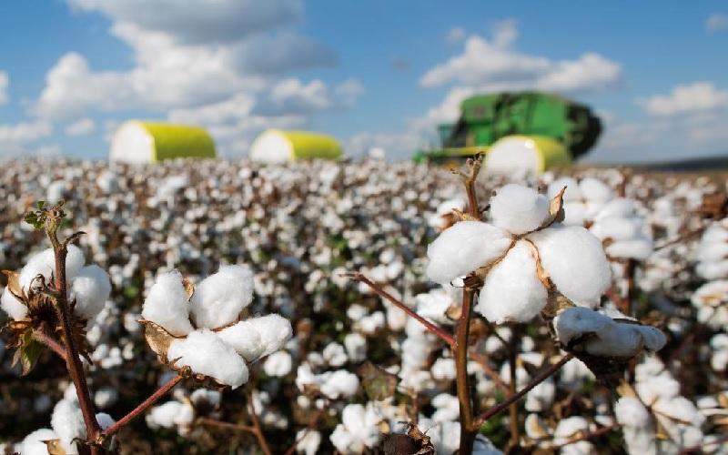 Manejo Integrado de Pragas nas lavouras de algodão
