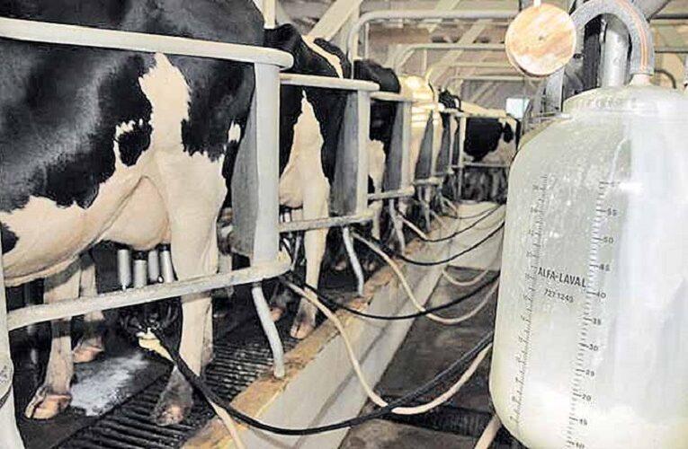 Preço pago ao produtor de leite segue tendência de alta