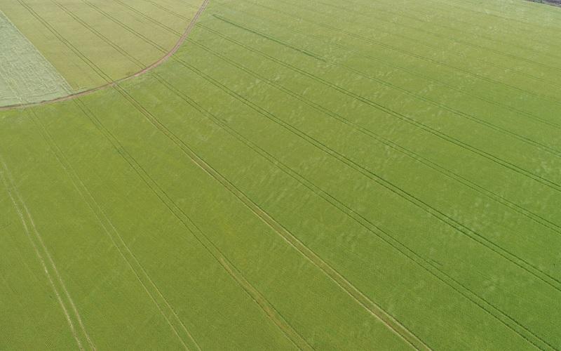 Sucessão soja-trigo: Pragas de sistema