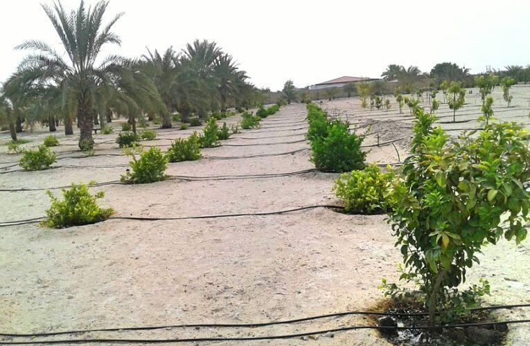 Produzir lavouras no deserto já é realidade