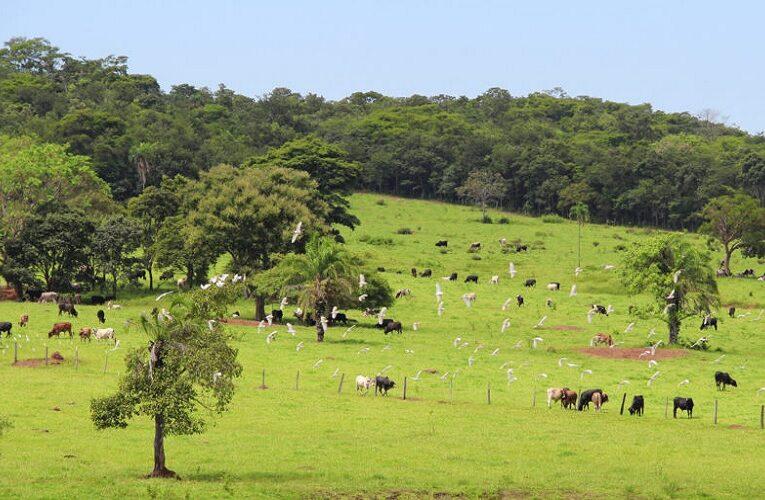 Crédito rural destinado a melhorias ambientais