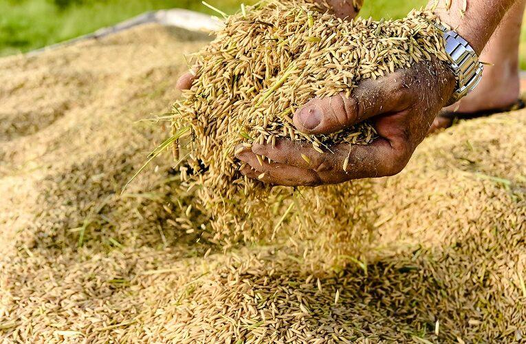 Ritmo de negócios do arroz segue enfraquecido