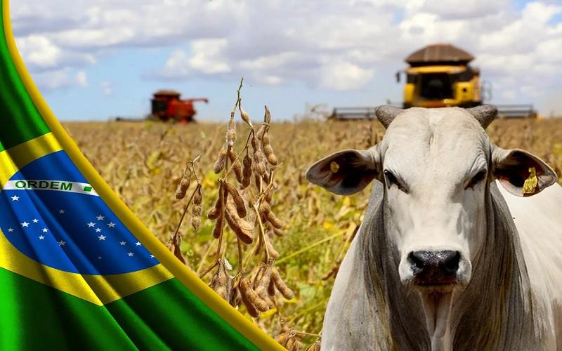PIB do setor agropecuário registrou alta no primeiro trimestre