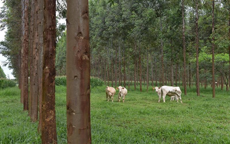 Agropecuária brasileira ajuda a salvar o planeta