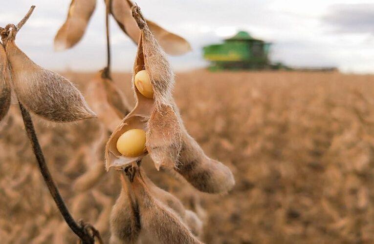 Preços da soja variaram com força em maio