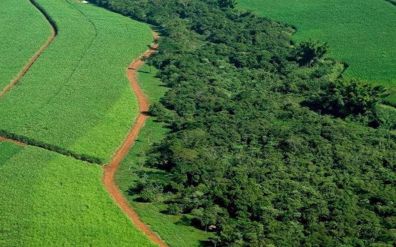 Agricultura lidera a preservação ambiental