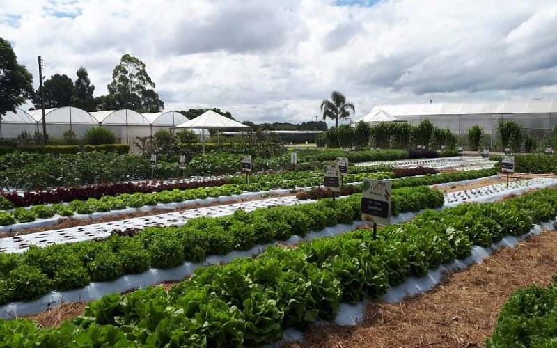 Novas tecnologias para as políticas da agricultura familiar