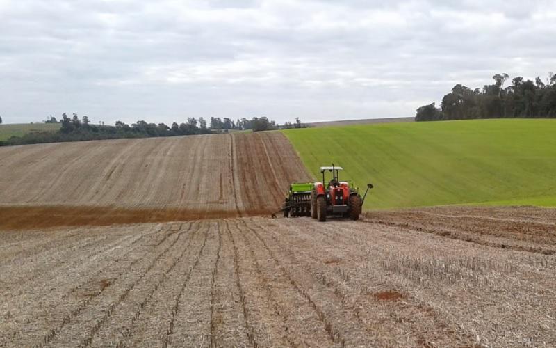 Previsões climáticas orientam a semeadura do trigo