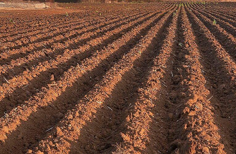 Começou hoje o vazio sanitário da soja no Paraná