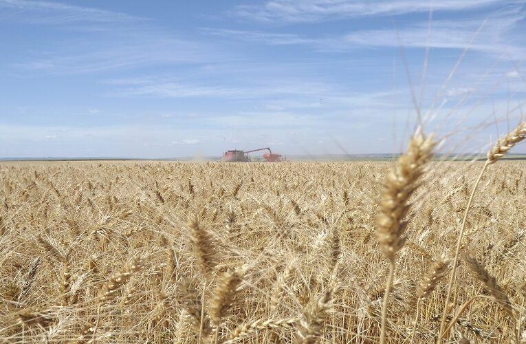 CNA e Embrapa debatem expansão do trigo no Cerrado