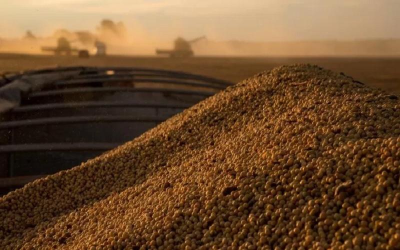 Processamento de soja deve registrar queda