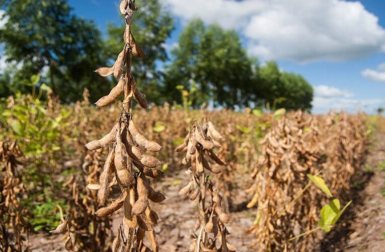 Mercado de soja deve seguir lento no Brasil
