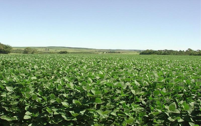 Produção sustentável e mercado de soja