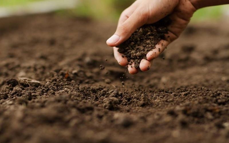 Estrutura do solo e produtividade das lavouras