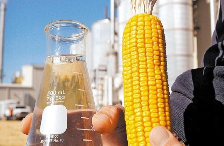 Consumo de milho puxado por etanol no Mato Grosso