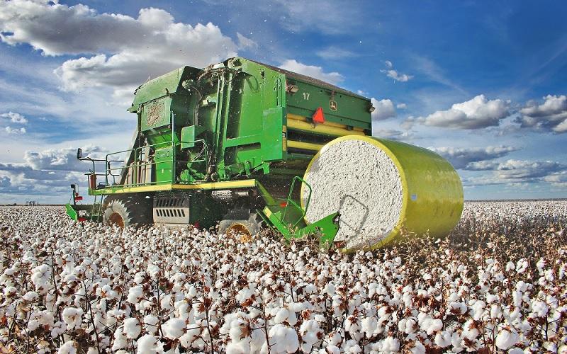 Indianos querem mais algodão brasileiro