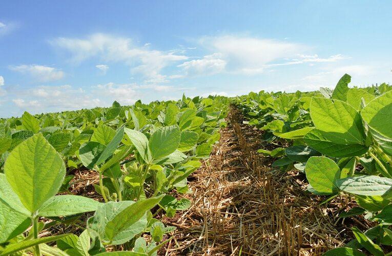 Monitoramento da safra agrícola e sua importância
