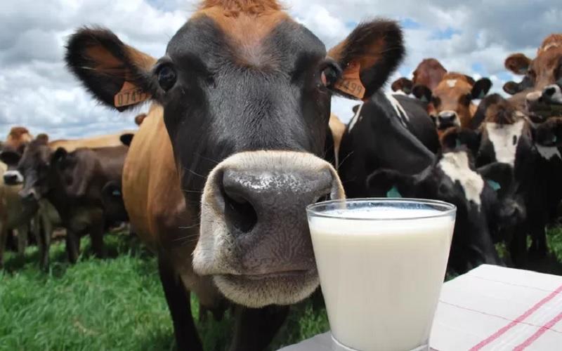 Custo de produção da pecuária leiteira