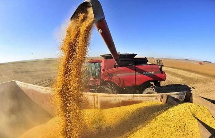 Produção brasileira de grãos crescerá 27% até 2030
