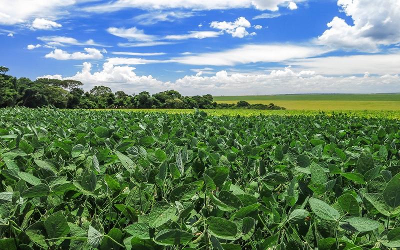 Plantas mais resilientes às mudanças climáticas