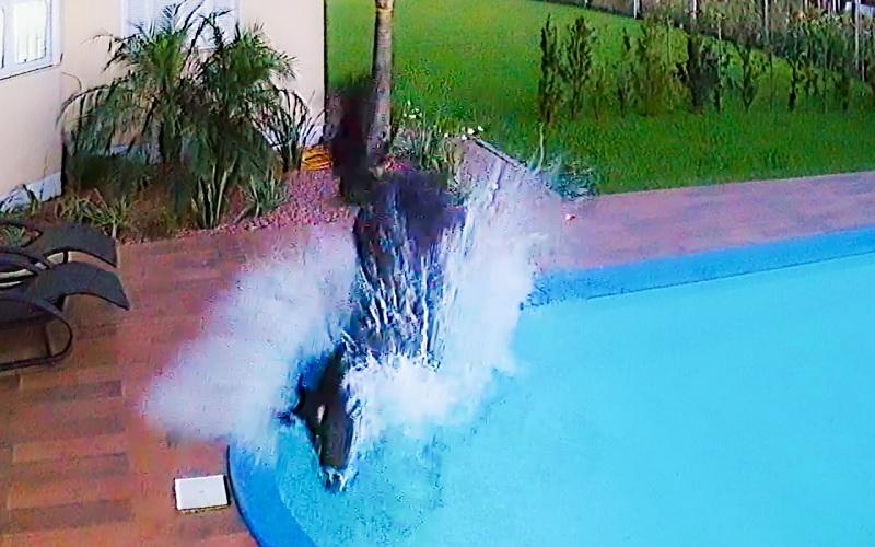 Cavalo cai na piscina