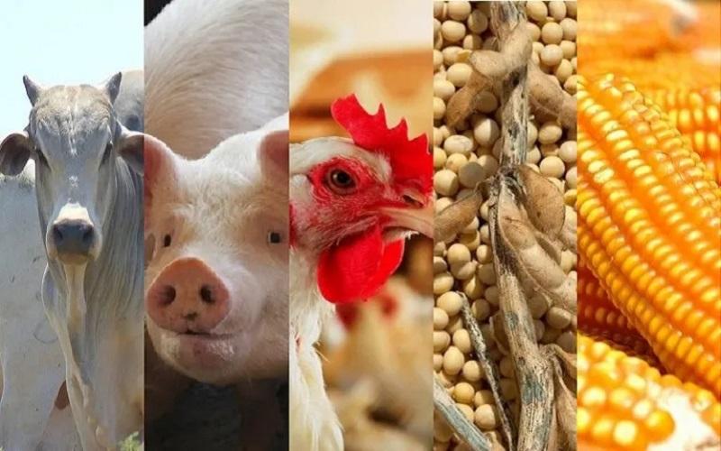 suínos, boi, frango, farelo de soja e milho
