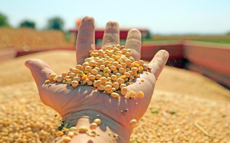 Mercado da soja parado em todo o Brasil