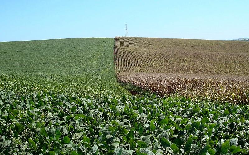 Custos da soja e do milho