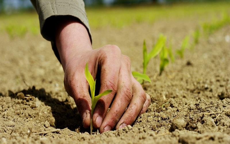 Junta Interamericana de Agricultura