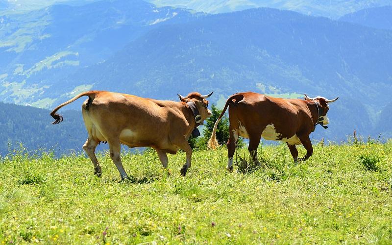 Casos de vaca louca