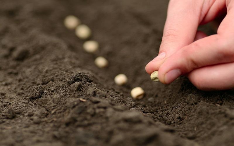 plantio de soja