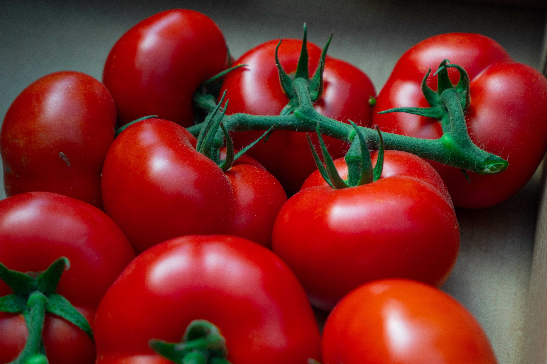 aumentar a resistência natural do tomateiro